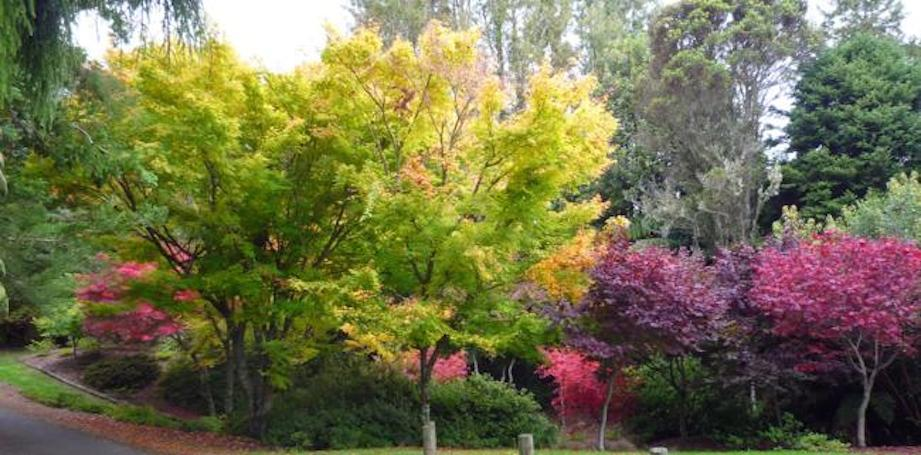 Botanical gardens autumn colour Taupo
